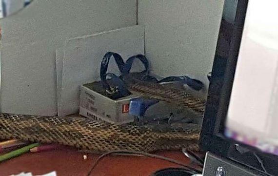 """Dwumetrowy wąż w mieszkaniu. """"Ukrył się za szafką"""""""