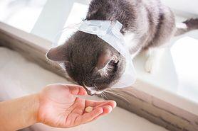 Świerzb u kota – drżążący, uszny, objawy, leczenie