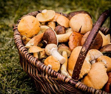 Jak przechowywać grzyby. Praktyczny poradnik