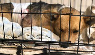 Młody psiak stał się ofiarą bestialskiego aktu
