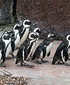 Nietypowa akcja wrocławskiego zoo