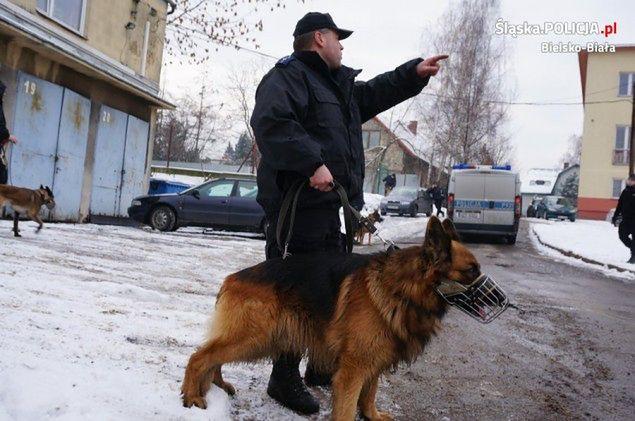 Owczarek niemiecki znalazł zziębniętą staruszkę