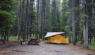 Od 6 czerwca można biwakować w lesie (zdjęcie poglądowe)