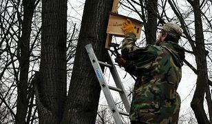 W Warszawie powstają nowe osiedla dla wróbli