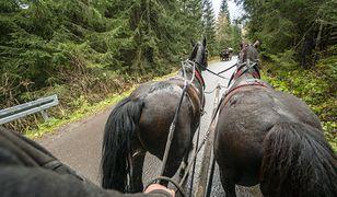Tatry. Konie z Morskiego Oka zostaną przebadane