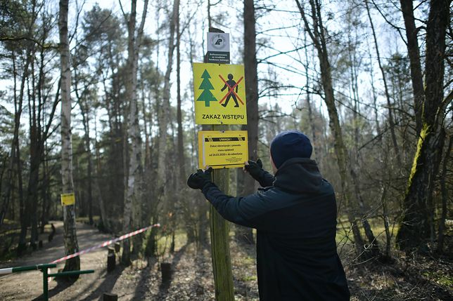 Ze względu na zagrożenie epidemią koronawirusa wprowadzono zakaz wstępu do Lasów Państwowych. Jednak część prywatnych właścicieli gotowa jest wynająć swój las do spacerów.