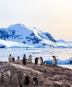 Marzysz o wyjeździe na biegun? Polska Stacja Antarktyczna rekrutuje pracowników