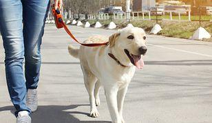 Właściciel podczas spaceru powinien mieć kontrolę nad swoim pupilem