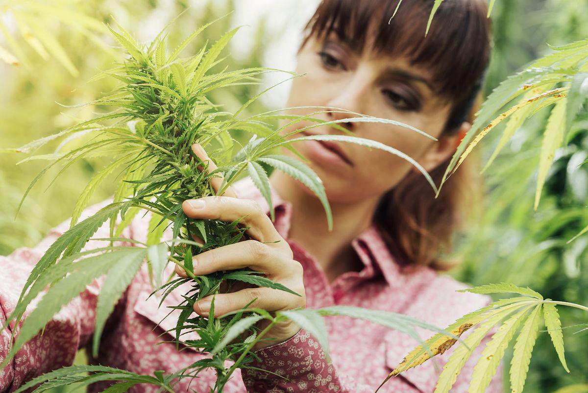 Kolejny amerykański stan legalizuje marihuanę. Tym razem Illinois