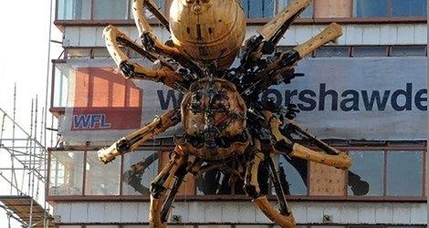 Gigantyczny pająk na północy Anglii