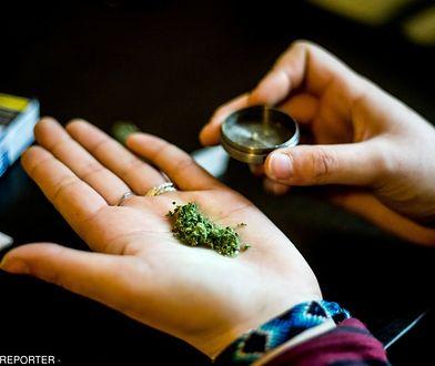 Wielka Brytania: Medyczna marihuana już dostępna w aptekach