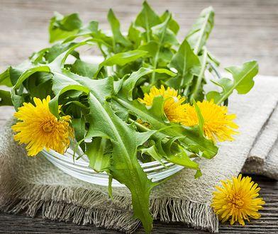 W ziołolecznictwie wykorzystuje się głównie korzeń i liście mniszka, niekiedy zbiera się również kwiaty