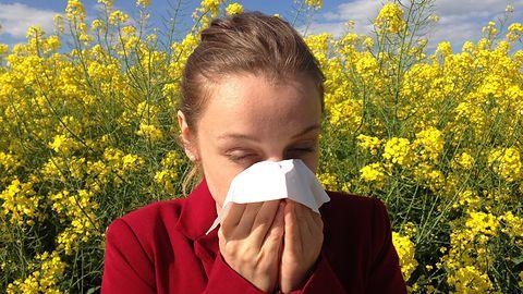 Google dla alergików: informacje o pyłkach w wynikach wyszukiwania