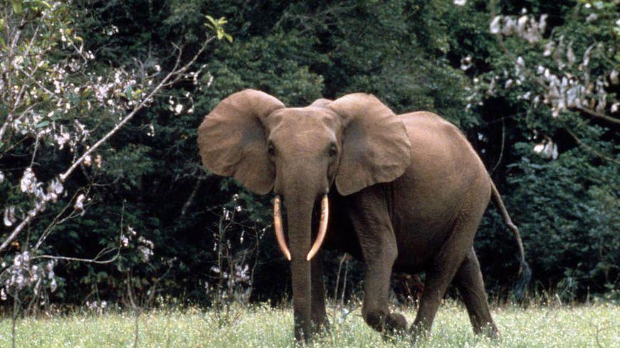 Dramat obrońców afrykańskich zwierząt: zapłacą za najdroższe uaktualnienie do Windowsa 10 w historii