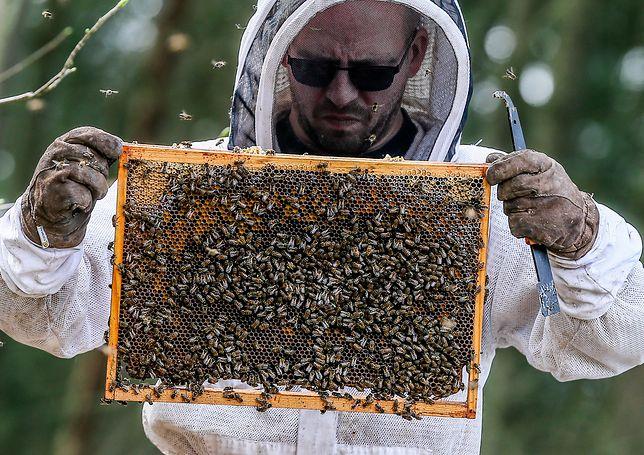 Zgnilec to zmora pszczelarzy