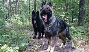 Ktoś zastrzelił psy w lesie w Turkowicach. Jest nagroda za pomoc w ustaleniu sprawcy