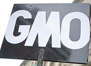 Trybunał oddalił skargę Komisji na polski zakaz GMO w paszach
