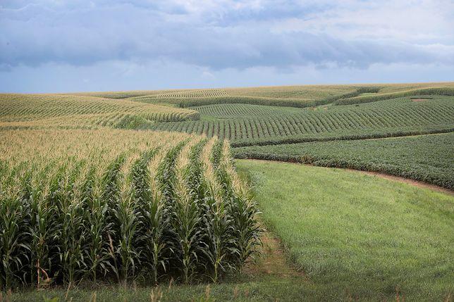 Żywność GMO może mieć w przyszłości ogromne znaczenie.