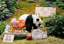 Najstarsza panda świata ma już 35 lat. Wyprawiono jej huczną imprezę