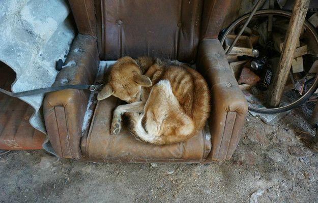 Kostka - pies, który konał z głodu na fotelu w szopie. Właściciel zwierzaka usłyszał wyrok