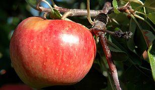 Sok z jabłek może hamować rozwój alzheimera