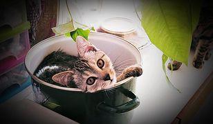 Takie są warszawskie koty [Wasze zdjęcia]