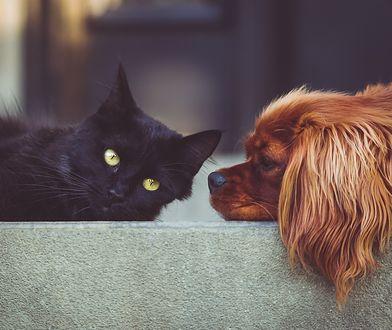 UOKiK opisuje nieprawidłowości w karmie dla zwierząt domowych