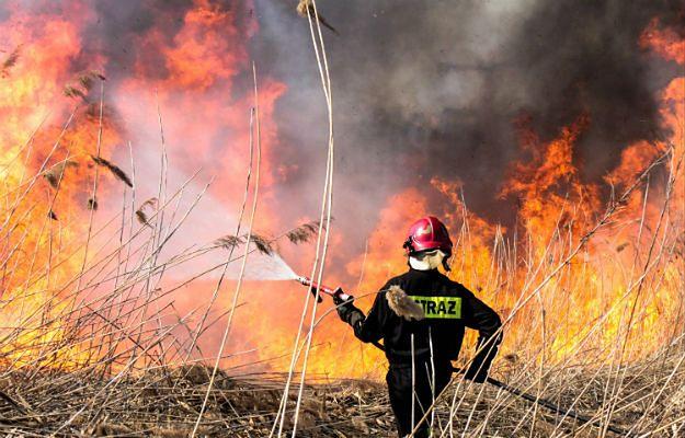 Pożar składowiska odpadów w Pukininie. W akcji 8 zastępów strażaków