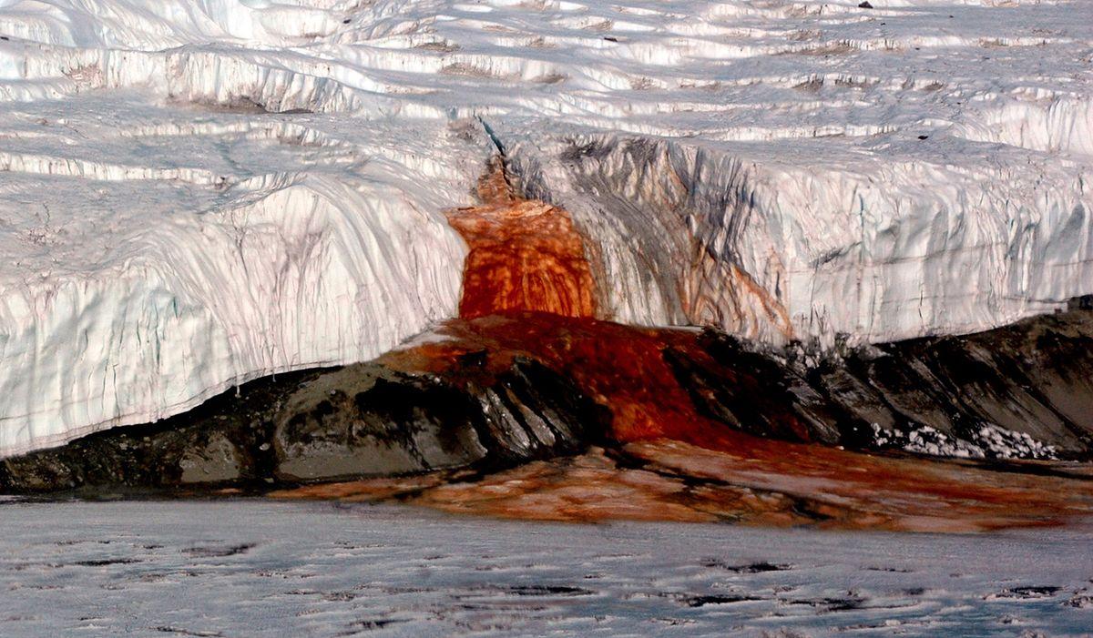 """Antarktyda. Naukowcy odkryli, czym jest """"krew lodowca"""", ale region skrywa więcej sekretów"""