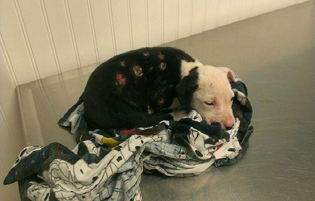 Uratowany z płonącego domu szczeniak został strażakiem