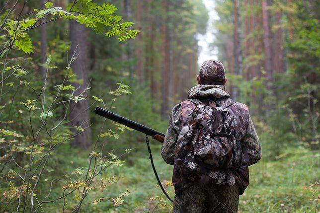 Przyrodnicy alarmują. Myśliwi zastrzelili dwa wilki