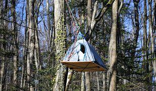 Aktywiści okupują las na Podkarpaciu. Przedstawili żądania