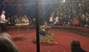 Rosja. Lwica zaatakowała dziecko w cyrku