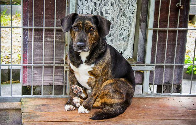 Kujawsko-pomorskie: Mężczyzna uśmiercił psa. Grozi mu pięć lat więzienia