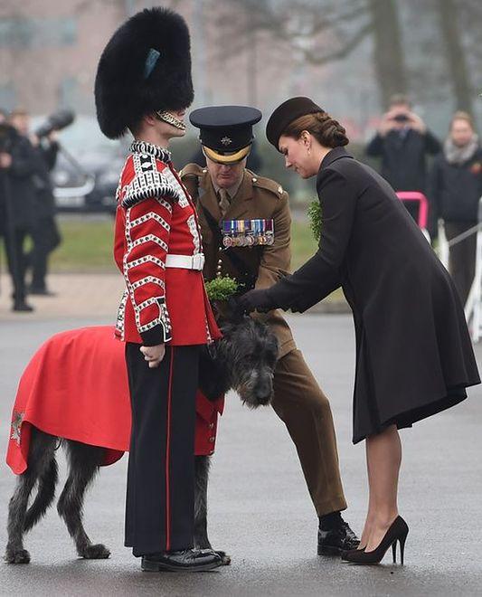 Siwy kudłacz w służbie Jej Królewskiej Mości