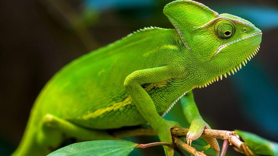 Ekran jak skóra kameleona, idealny dla reklam i aktywnego kamuflażu