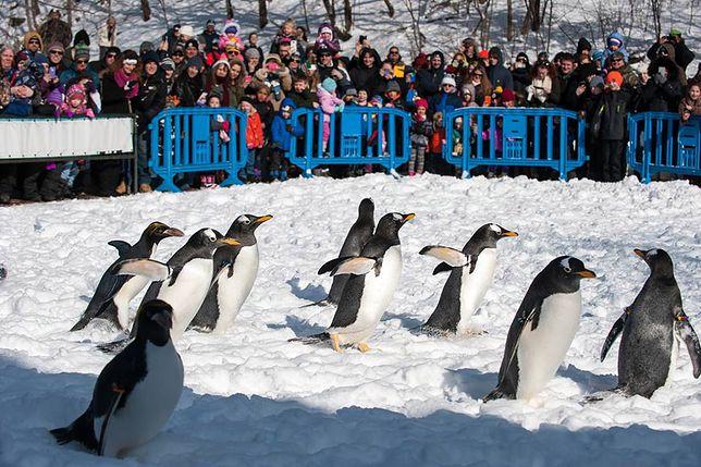 Zoo z Pittsburgha z polską technologią
