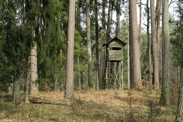 las, polowanie