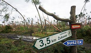 Zniszczony przez nawałnicę las w okolicach Suszka