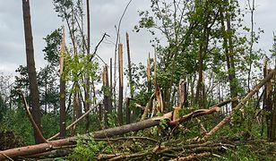 Na obozie w Suszku, pod zwalonymi przez wichurę drzewami, zginęły dwie nastolatki