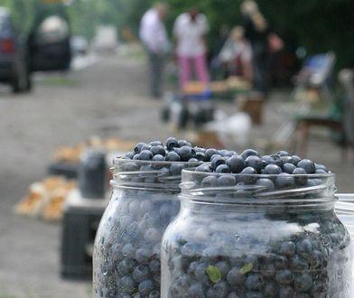 """Ceny jagód 2018. """"Jagód jest mało, owoce zasuszone, przez 500+ ludziom nie chce się zbierać"""