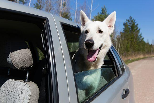 Jak wynika z badań naukowców z Uniwersytetu w brytyjskim Bristol - blisko połowa psów ma stany lękowe związane z hałasem.