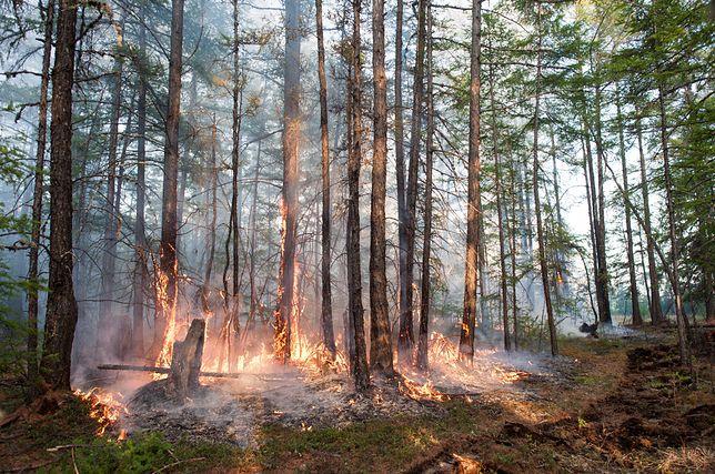 Pożar lasu w Jakucji na Syberii, 2 czerwca 2020.