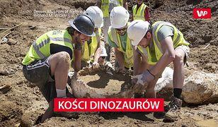 Kości dinozaurów znalezione koło Denver