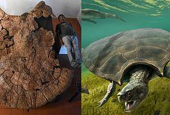 Prehistoryczne żółwie. Były wielkości samochodu
