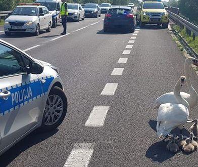 Akcja policji na drodze krajowej nr 6