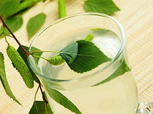 Jak pozyskać sok z brzozy?