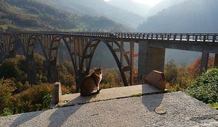 W Czarnogórze jest jak w Zakopanem przed inwazją turystów