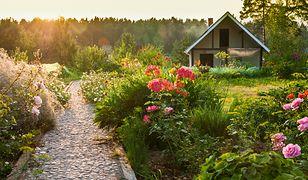 Przygotuj ogród na mrozy i deszcze