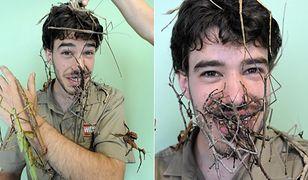 To nie patyki, tylko owady